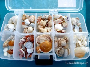 other side of boxed seashells from sanibel