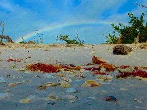 rainbows and seashells cayo costa