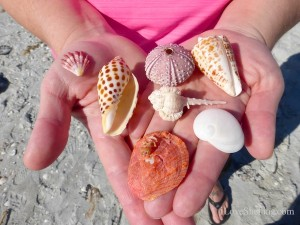 rare seashells on sanibel island florida