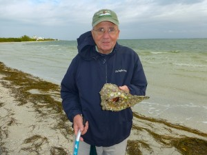 ron finds large encrusted whelk