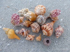 sandy shells of sanibel florida