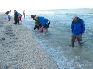 sanibel shells wash ashore
