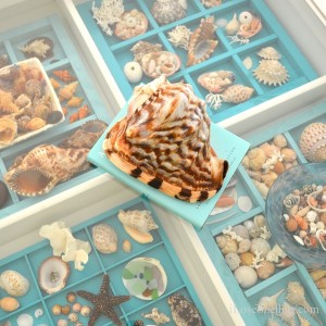 seashell display table pam rambo