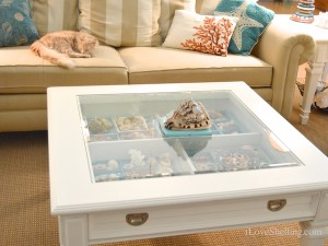 seashell display table with rustie kitty