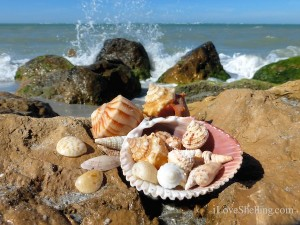 seashells at South Seas Resort Captiva Florida