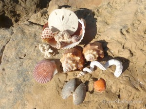 seashells at south seas island resort january