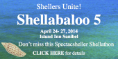 Sanibel Shellabaloo 5 April
