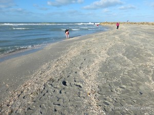 shelling captiva new beach