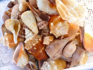 shells in a bag