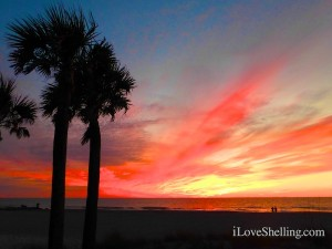 sunset captiva red sky palms