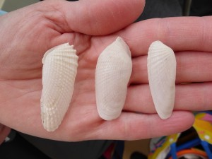true fallen false angel wing shells
