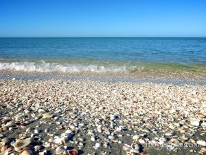 captiva calm beach with sea shells