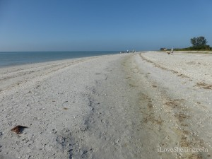 landscape of gulf side city park sanibel