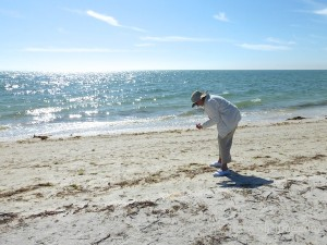 looking for seashells on sanibel island florida