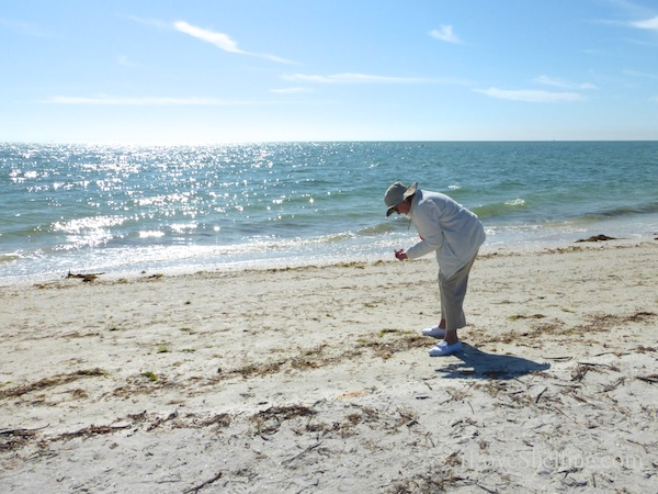 Seashelling And Cybershelling At Sanibel Lighthouse Beach