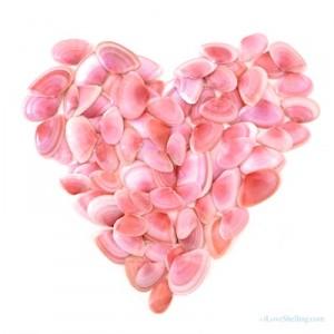 rose petal telling shells valentine day pink