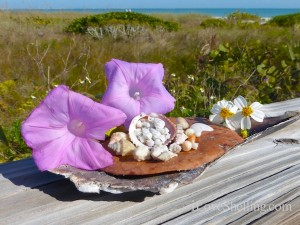 sanibel seashells and sun flowers