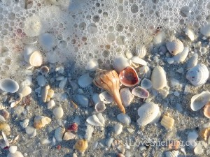 seashells and sea foam on Sanibel island