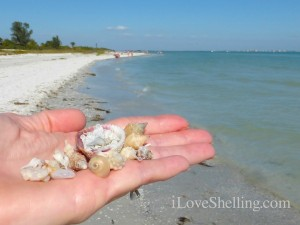 seashells at lighthouse beach sanibel
