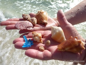 shells and palm tree sanibel surf