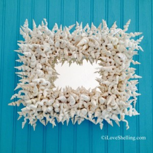 pam rambo worm shell frame