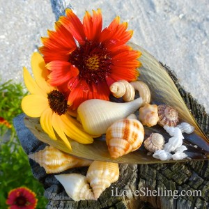 seashells and sunflowers at the beach