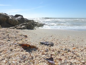 beach full of shells on captiva island florida