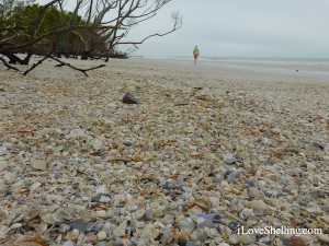 beachcombing on fort myers beach