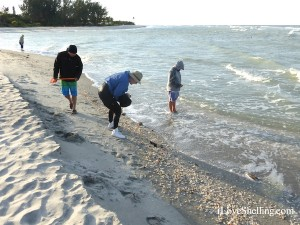 blind pass captiva sand bar shells