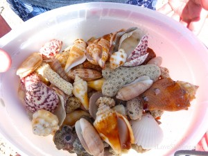 bucket of seashells on sw florida coast