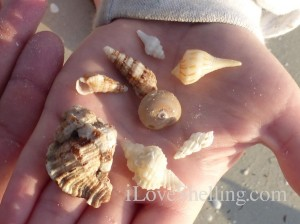 finding sea shells