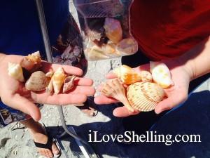 justins shells
