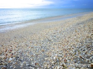 paradise shells on a sanibel beach
