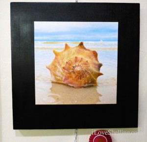 seashell photograph winner pam rambo