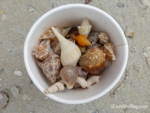seashells in a cup