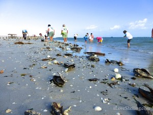 shelling after a storm on Sanibel