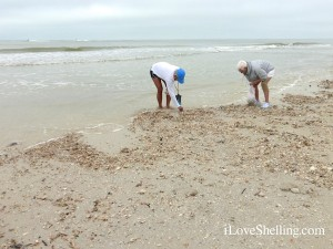 shelling fort myers beach point estero resort