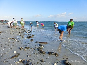 shells and shellers after stormy weather on sanibel
