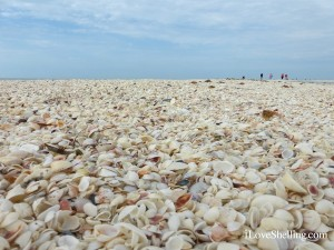 shells for miles on Sanibel Island Florida