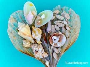 shells from sanibel island florida lighthouse beach