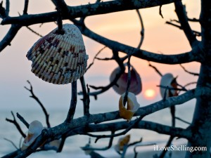 wish upon a seashell tree