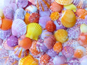 Easter Eggshellent Scallop Shells
