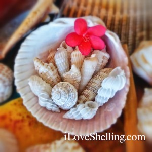 sweet sanibel shells with flowers