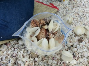 bag of Sanibel shells with dosinias