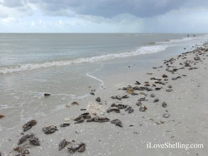 beach at sanibel lighthouse before the storm
