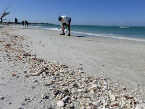 beach combing tour to cayo costa
