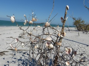 cayo costa shell tree