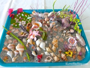 cindy's shell display shellabaloo 5