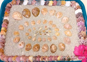 creative seashell picture