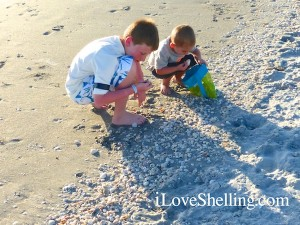 kids love collecting seashells on the beach